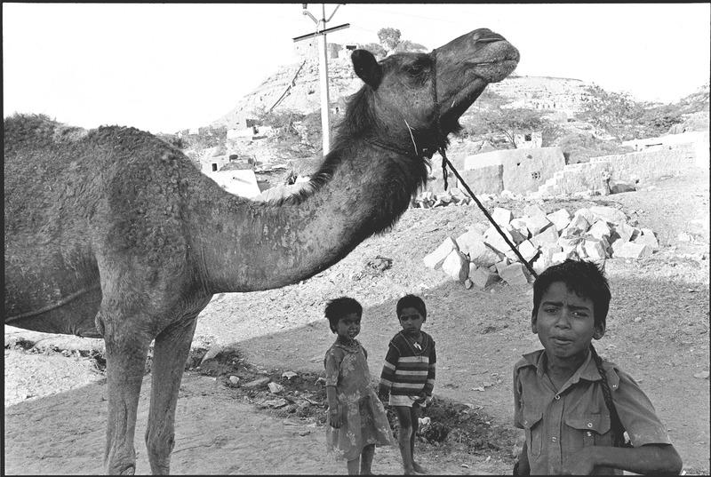 Camel Herder in Jaisalmer, India